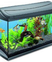 Bereg Aquarium – Ivándel Mihály vállalkozása