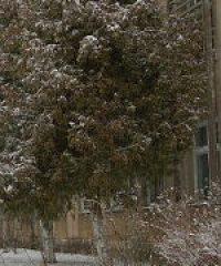 Jánosi Középiskola