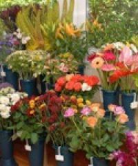 Virág- és edénybolt