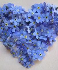 Nefelejcs Virágüzlet